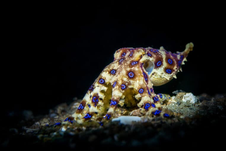 15 Adorable Deadliest Animals That Could Kill You