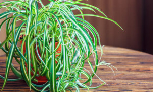Top 10 Houseplants That Relieves Stress And Purifies The Air