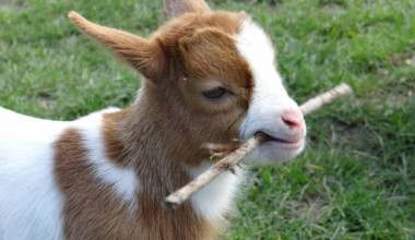 17 Cute Baby Animals That Can Melt Anyone's Heart