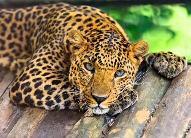 Most Beautiful Endangered Animals in the World
