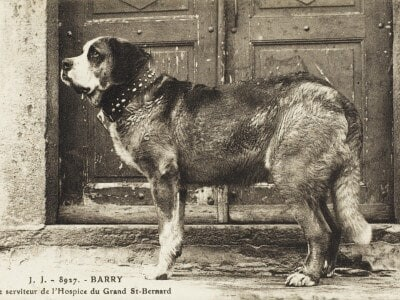 Barry the rescue dog