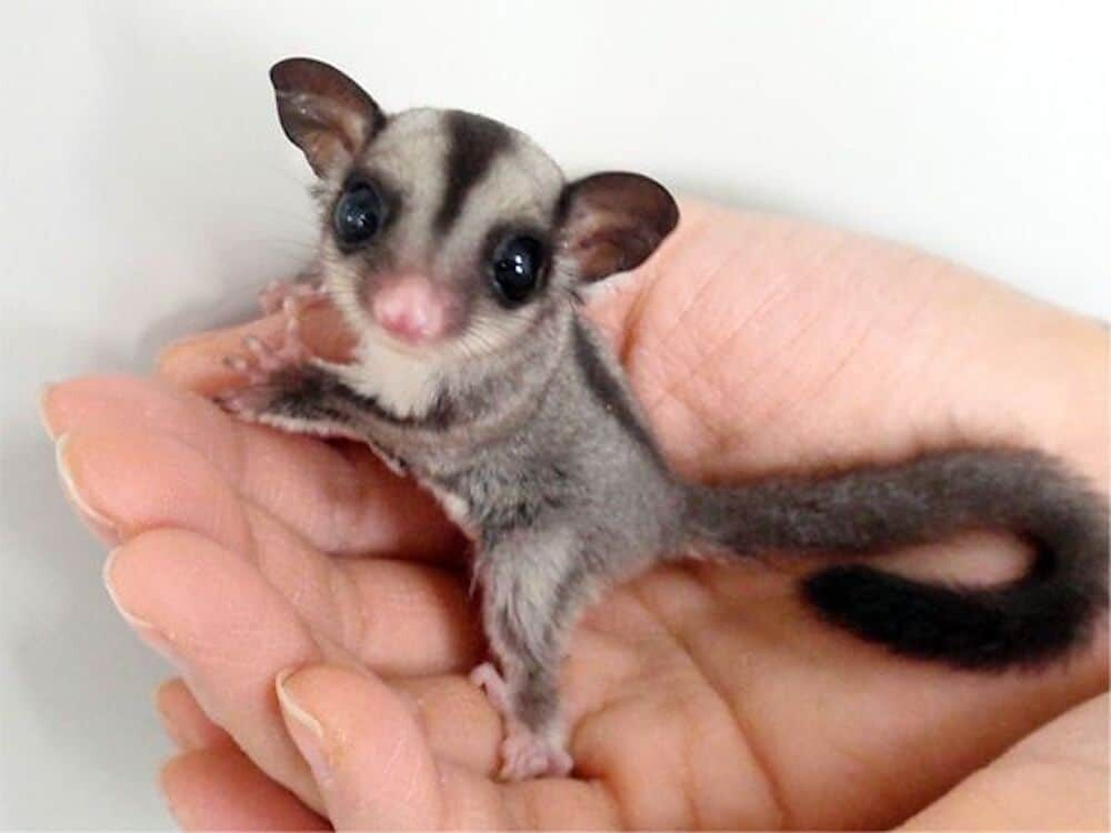 Cute Baby Animals That Can Melt Anyone's Heart