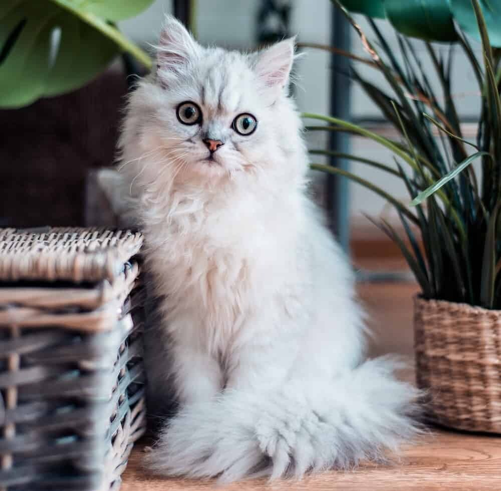 Fluffy animals for pets