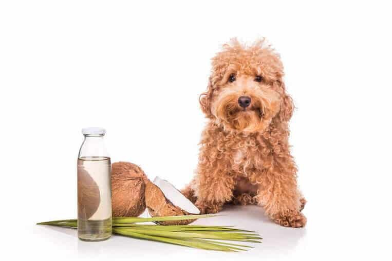 add coconut oil in dog's Diet