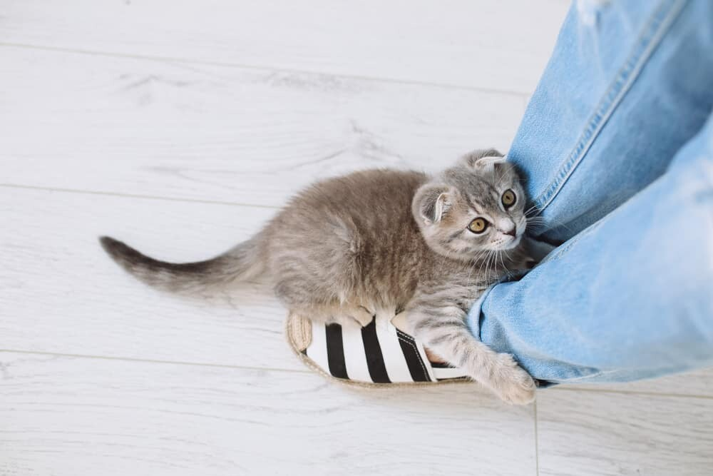 Top 10 Tips for a Healthy Cat