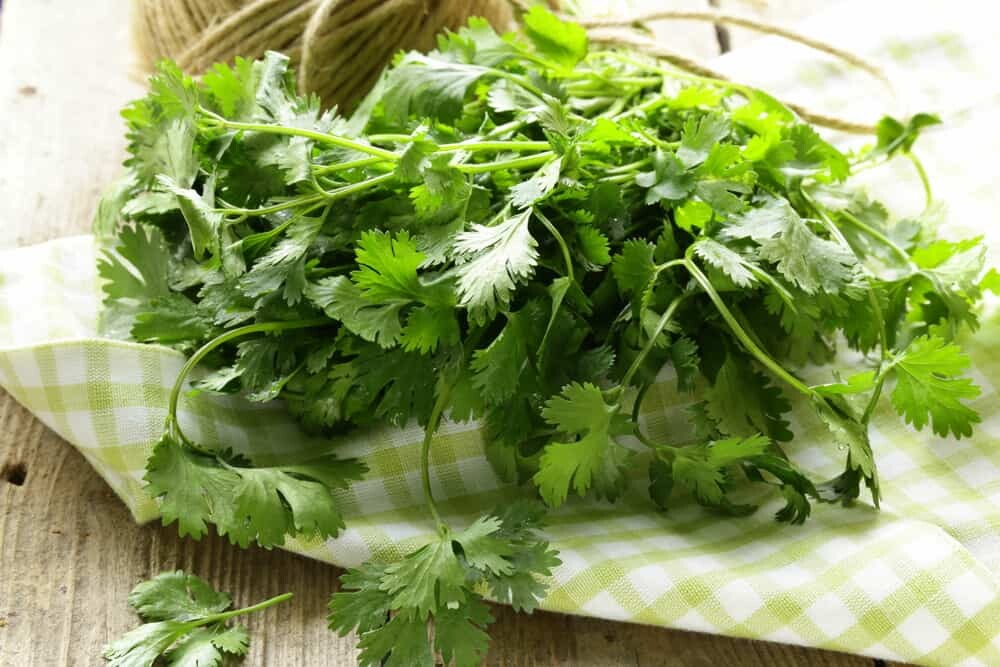 Cilantro benefits and side effects