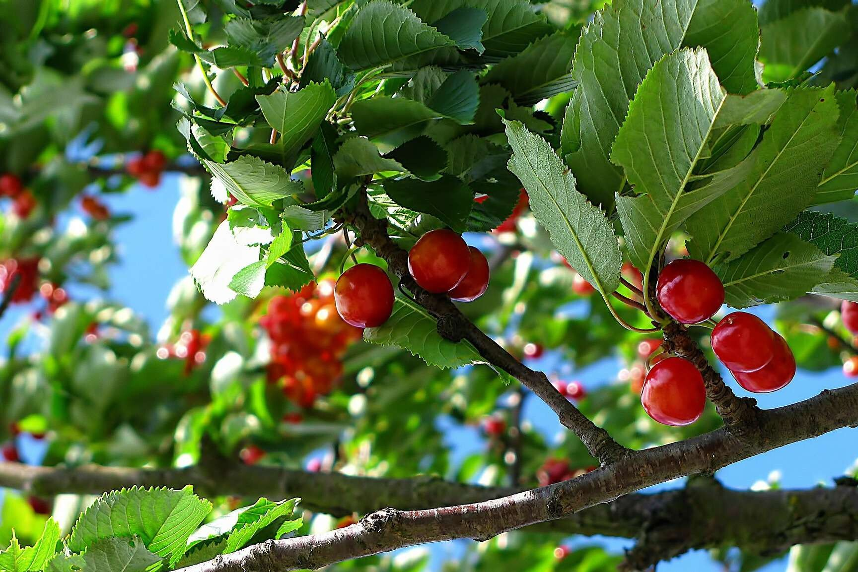 10 Things You Need to Know Before Planting Fruit Trees