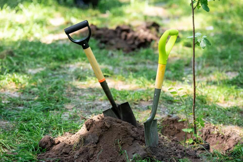 Considerations before planting fruit trees