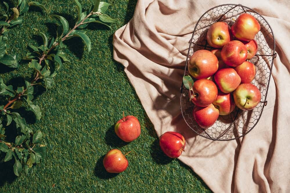 Ten Tips for Planting Fruit Trees
