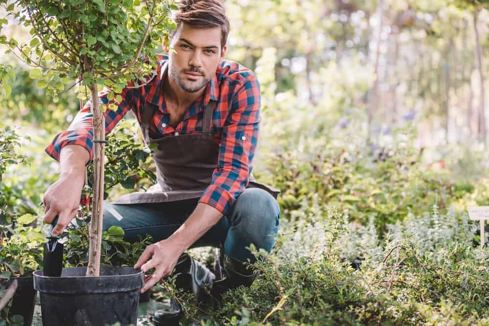 Things You Need to Know Before Planting Fruit Trees