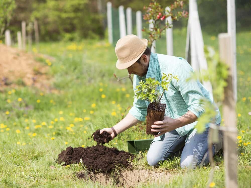 Tips for Planting Fruit Trees