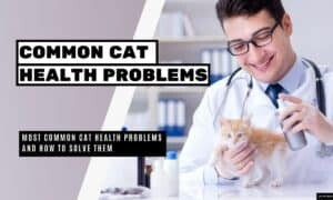Most Common Cat Health Problems and How to Solve Them