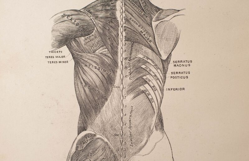Different Body Muscles