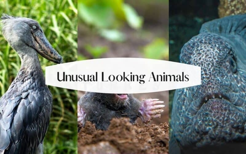 Unusual Looking Animals in the World