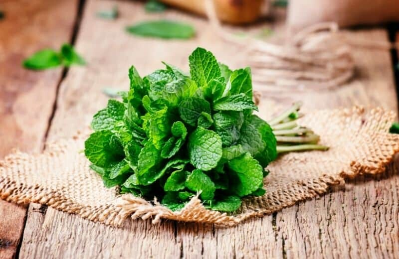 Foods for Healthy Skin-Mint