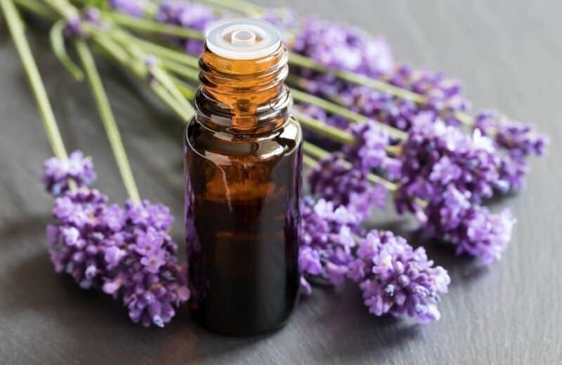 Lavender Essential Oil for Asthma