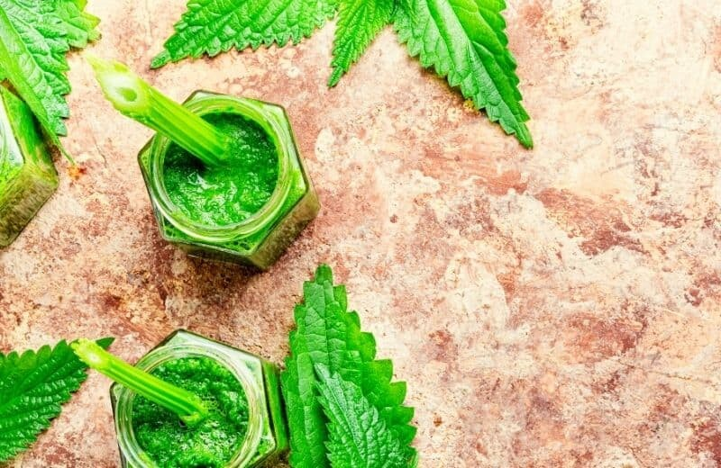 Nettle Leaf Health Benefits